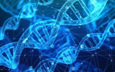 Il DNA, il manuale di istruzioni che ci rende unici